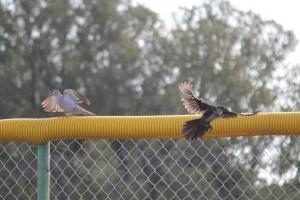 birding in bishop